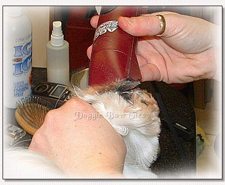 Image: The pads are carefully shaved any long tufts of hair between the pads and toes.