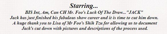 BIS, Int, Am, Can CH Mr Foo's Luck of the Draw-Shih Tzu Cut Down