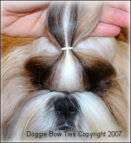 "Image:  Starting at the outer corner of the eye...make a part straight across.  Don't use too much hair for this section!!!  This section should be about 1/2"" deep; then part straight across the hairs above his nose."